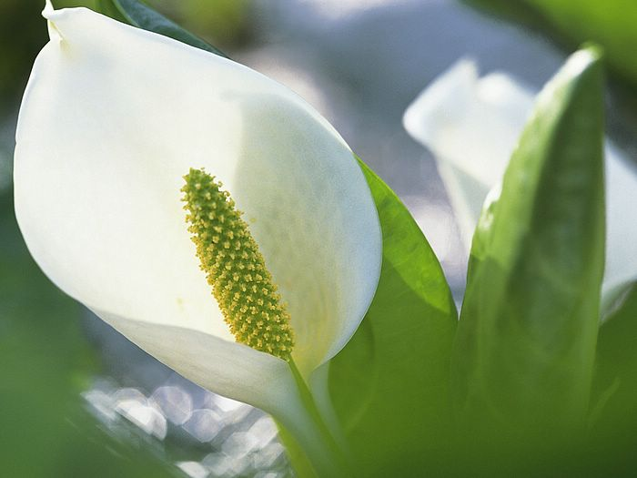 Photos of spring season flowers hd wallpaper next picture previous picture mightylinksfo Gallery