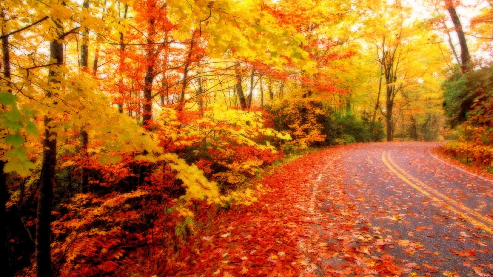 The Season Of Fall: Beautiful-Autumn-Season-Wallpapers-HD_1600x1000