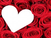 Roses_white-heart-love_romantic-hd-free-wallpaper