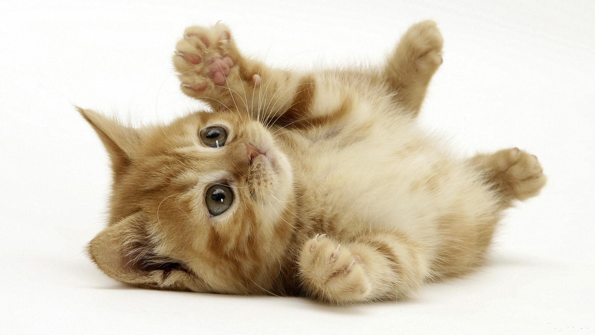 Beautiful Little Cat free hd wallpapers HD Wallpaper