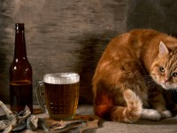 Cat-And-Beer-Funny-Animal-Wallpaper-HD-free-for-desktop