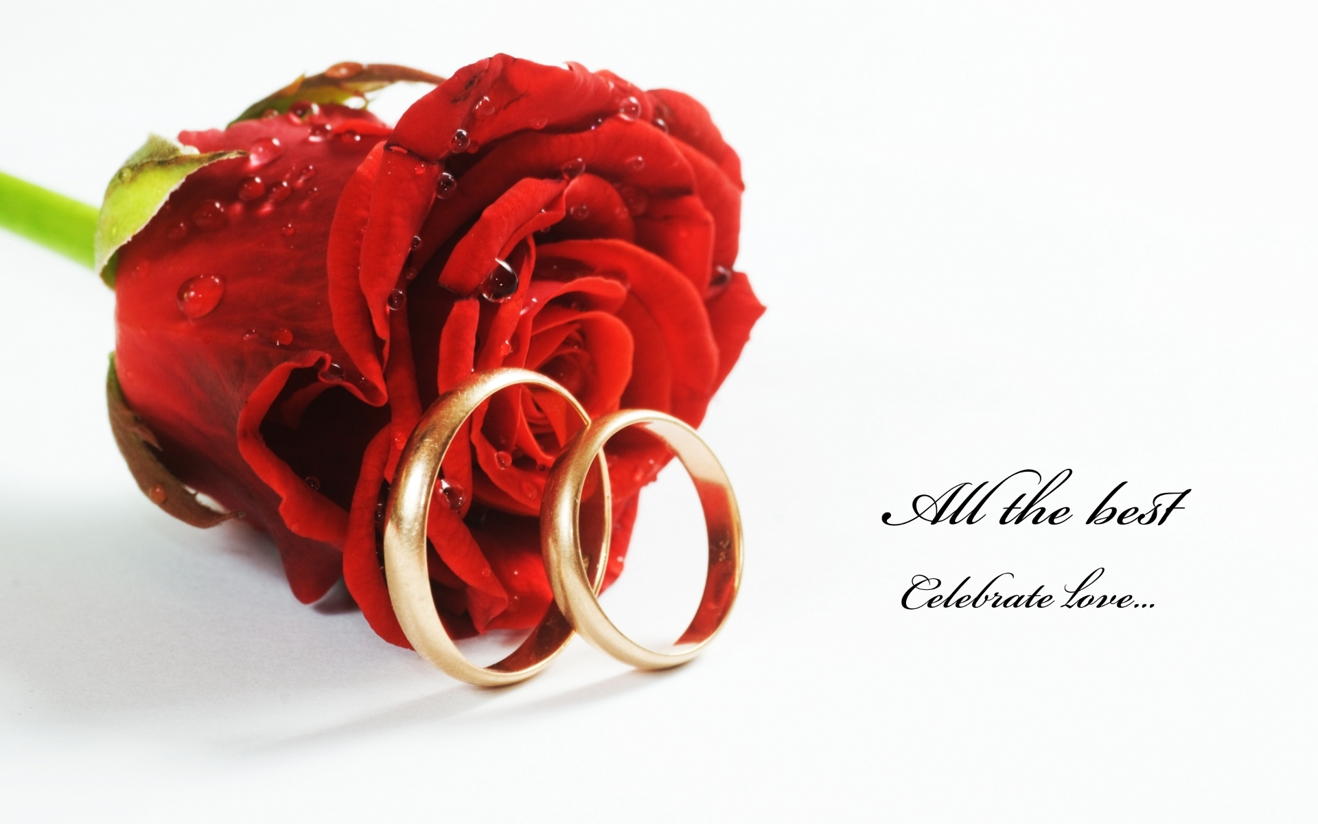 Nice-red-roses-with-rings-hd-free-wallpapers