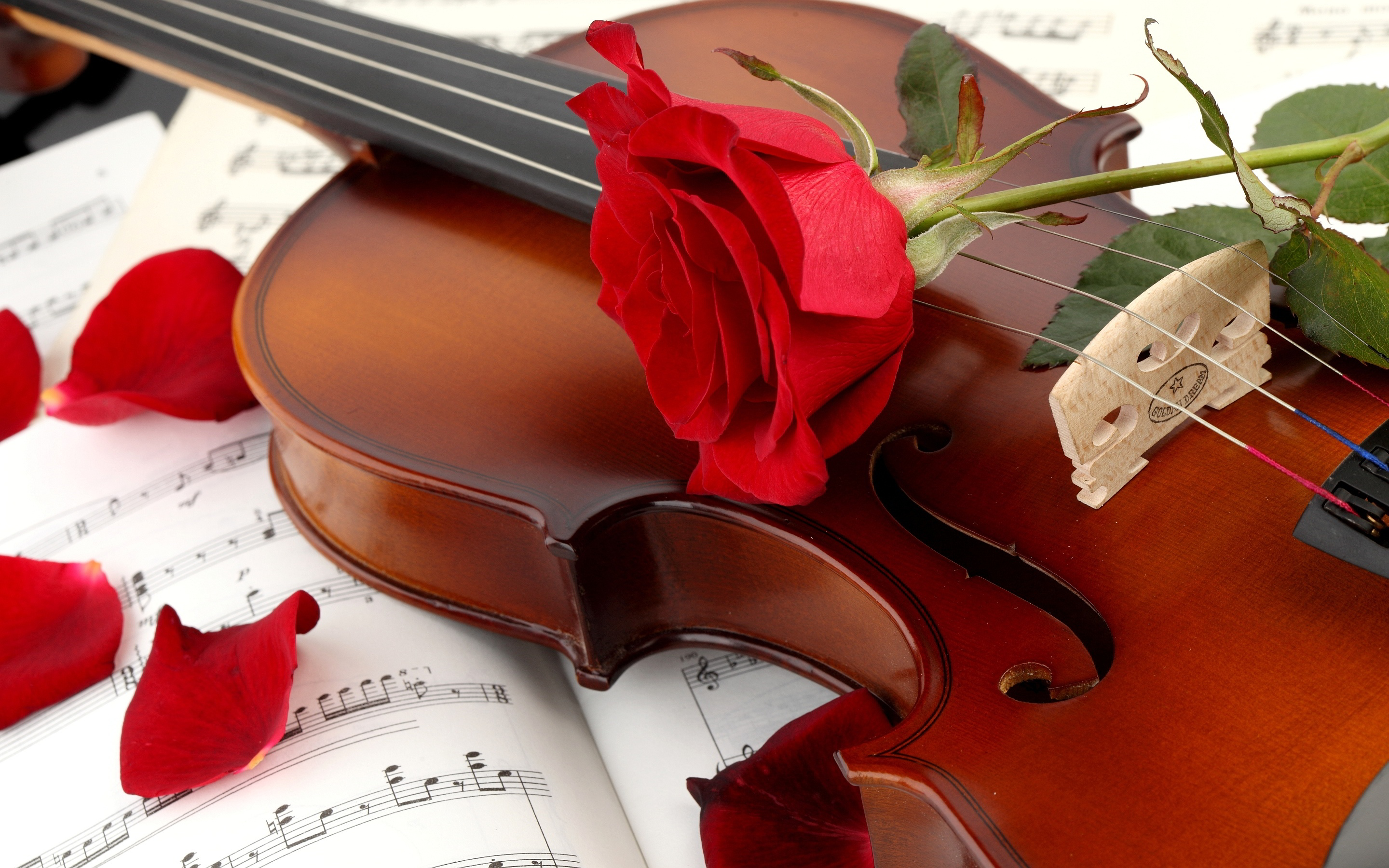 red-rose-with-violin-hd-free-wallpapers