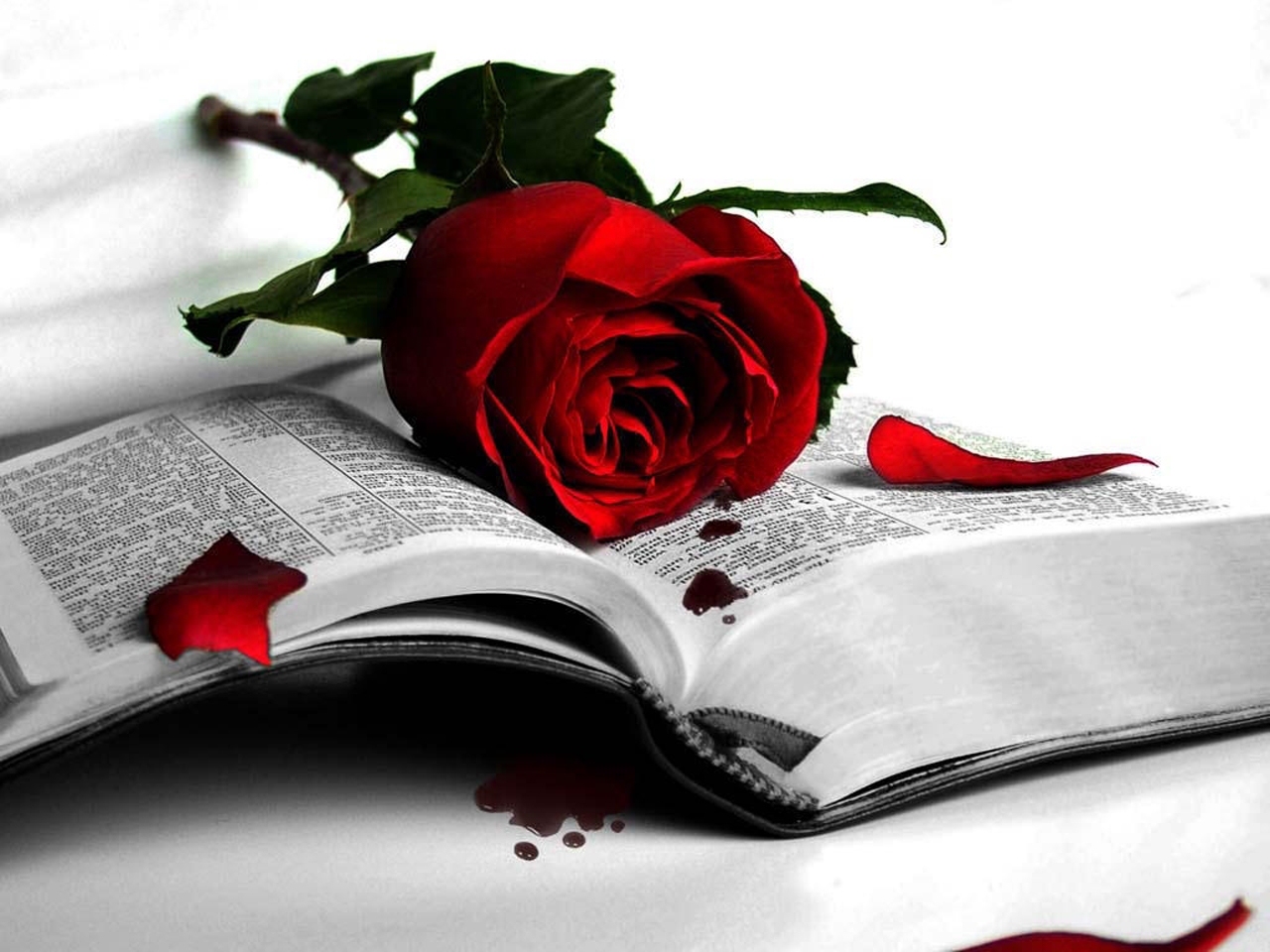 red-roses-with-book-free-hd-wallpapers-download