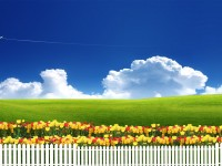 summer-season-hd-free-wallpapers-for-downloaded
