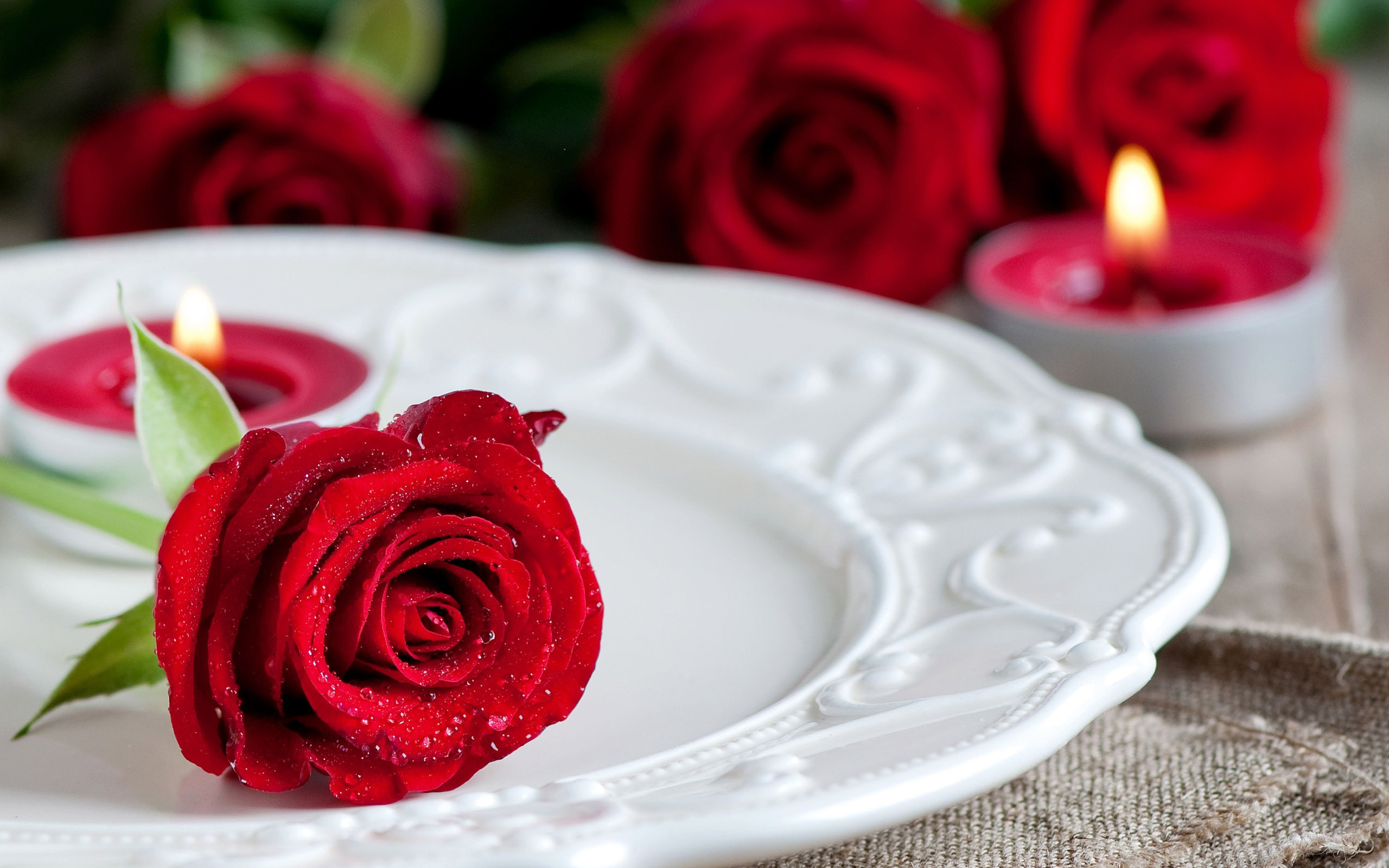 what-a-beautiful-look-red-roses-free-wallpapers-hd
