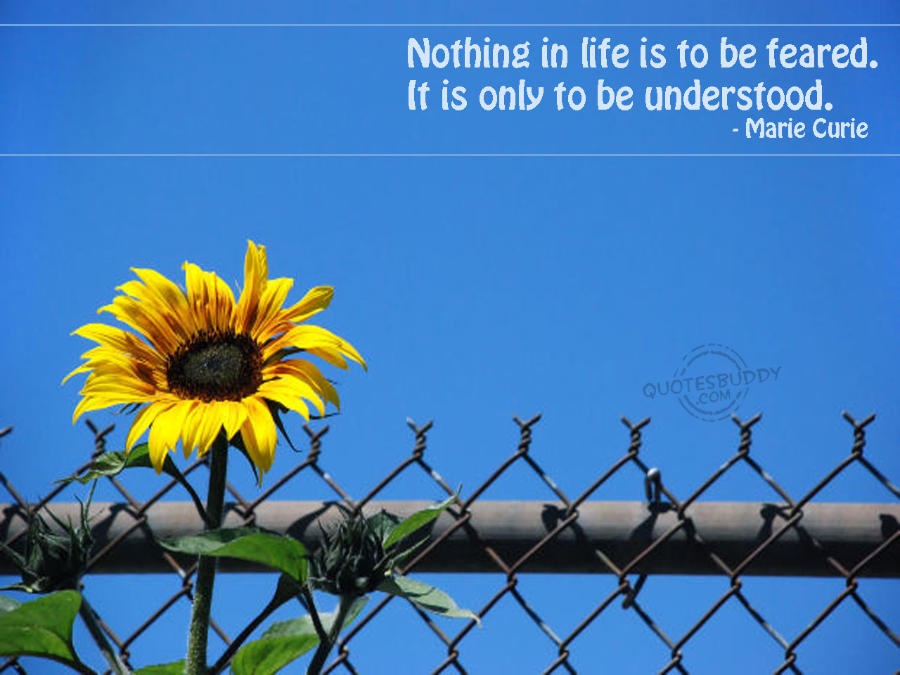 Life-Graphic-Quotes-Wallpapers-free-for-desktop