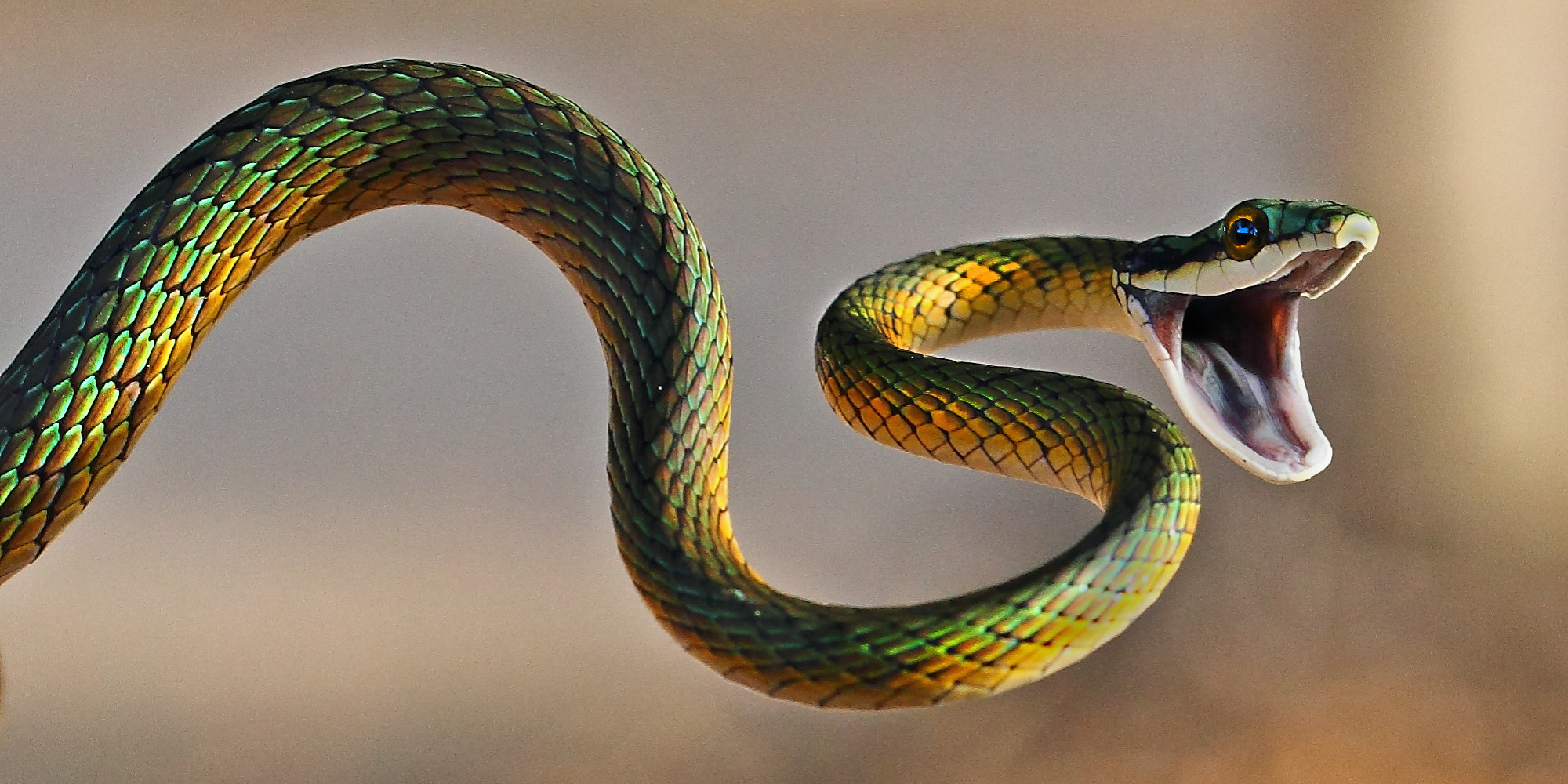 How to Prevent and Defend Against a Deadly Snake Attack