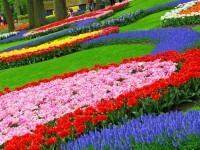 flower-gardens-free-wallpapers-for-desktop