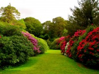 flowers_bushes_lawn_grass_buds_garden_free-hd-wallpapers