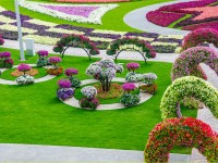 garden-flowers-hd-wallpapers-free