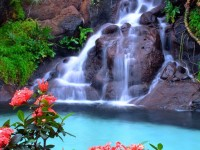 beautiful-waterfall-and-pink-flowers-free-hd-for-desktop