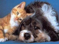Dog and cat wallpaper free hd wallpapers