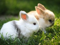 lovely hd free wallpapers rabbits free for desktop