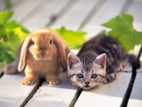 rabbit and cat sweet hd wallappers for desktop