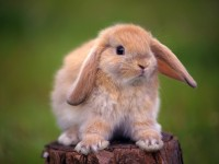 so sweet rabbit wallpapers images free hd