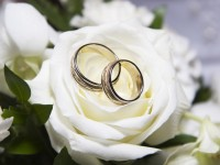 wedding rings hd free wallpapers white roses