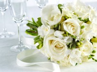 white roses flowers hd free wallpapers