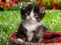 baby kitten wallpaper hd free