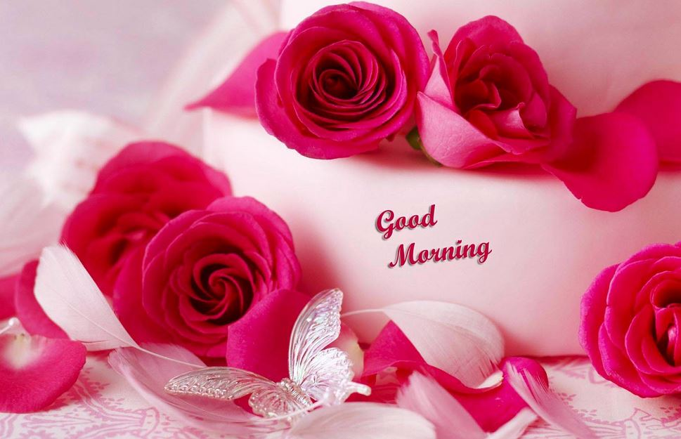 Lovely Good Morning whatsapp wallpaper - HD Wallpaper