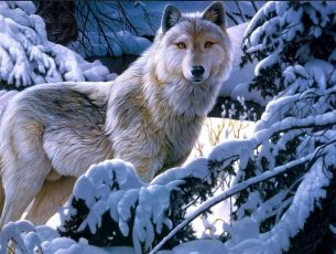 Wolf Wallpapers HD Free Download For Desktop