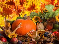 Autumn harvest pumpkin wallpaper