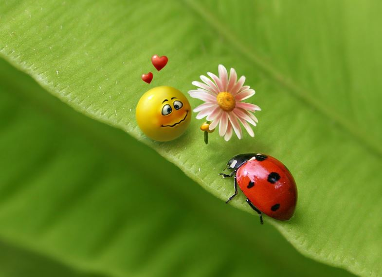Ladybug HD Wallpapers
