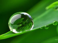 Dew drops wallpaper