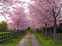 Download Latest Spring Season Wallpaper hd free