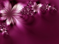 Beautiful Flowers Wallpaper Free Download For PC