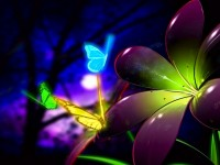 Rainbow Flowers Wallpaper For Free Download