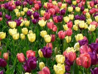 Spring Flowers Wallpaper Free Download