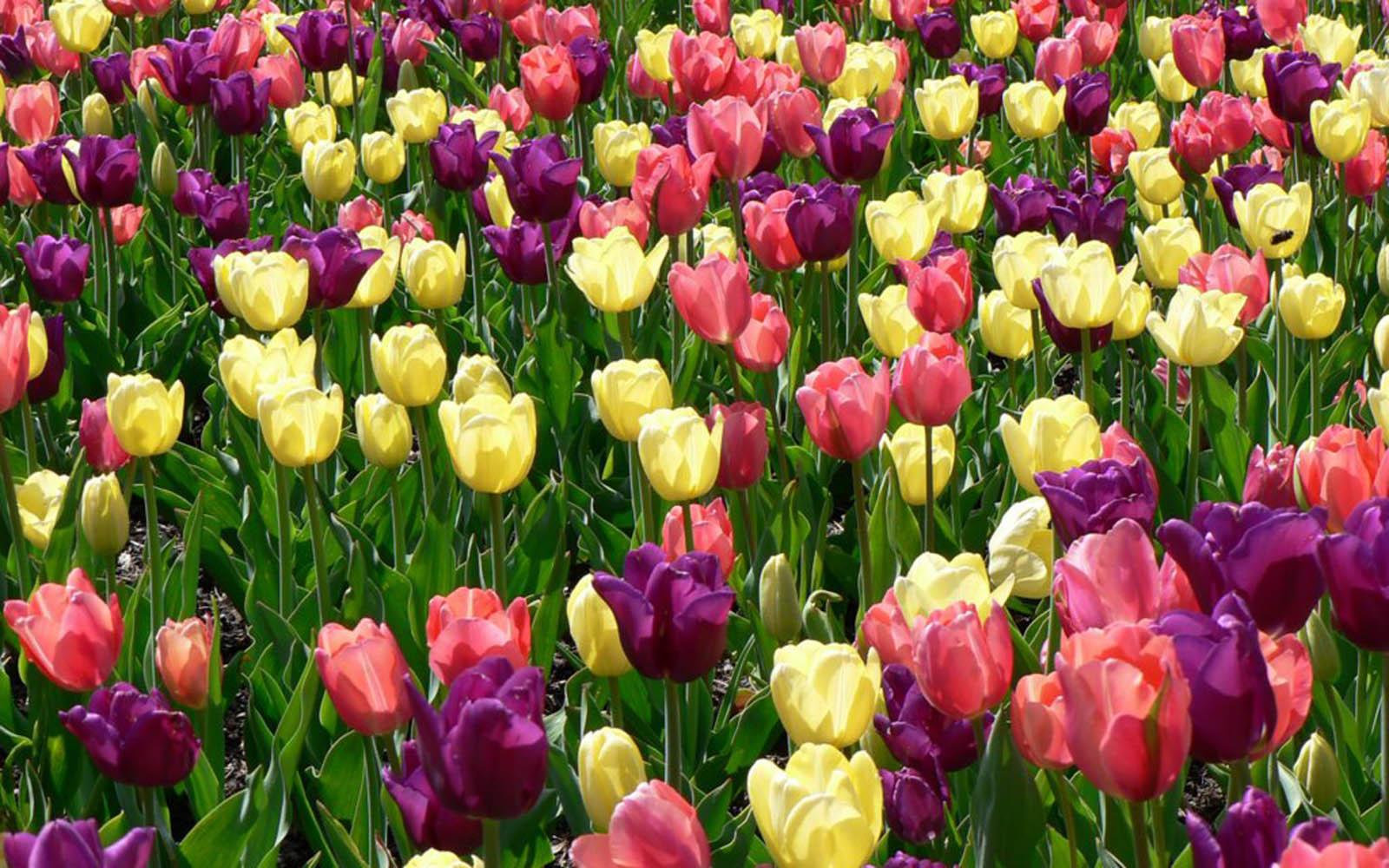 Spring Flowers Wallpaper Free Download