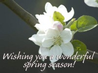 Download Latest Spring Season Wallpaper 2015