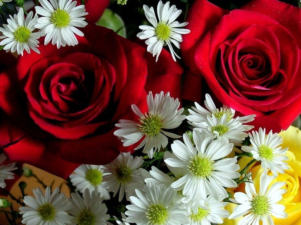 Flowers Wallpaper For Free Download