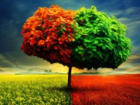 Best-tree-hd-free-wallpaper-spring-season-tree