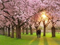 Wao-romantic-hd-spring-wallpaper-season-free