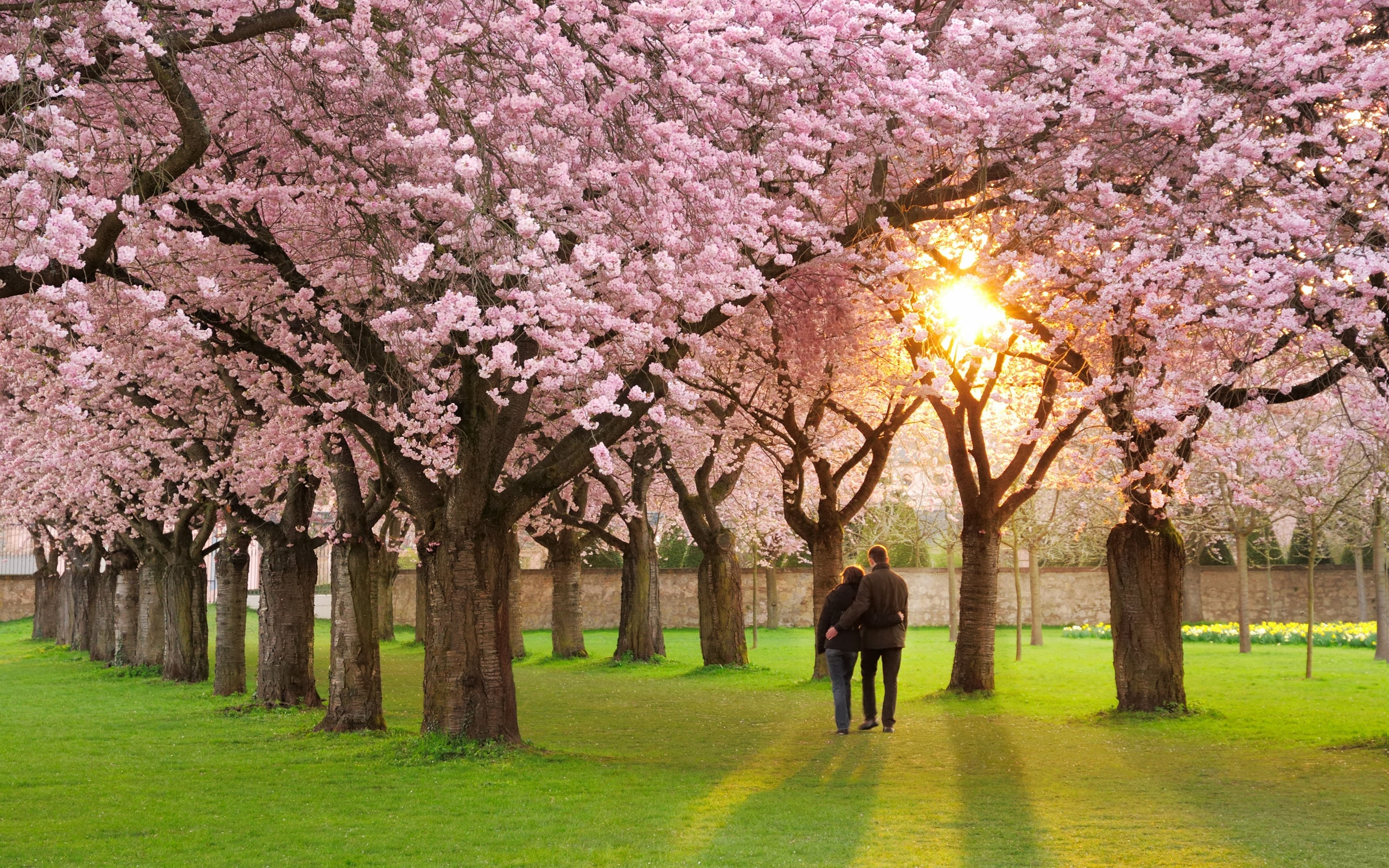 Wao Romantic Hd Spring Wallpaper Season Free