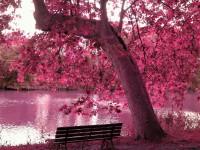 Very-amazing-free-best-free-wallpaper-spring-season