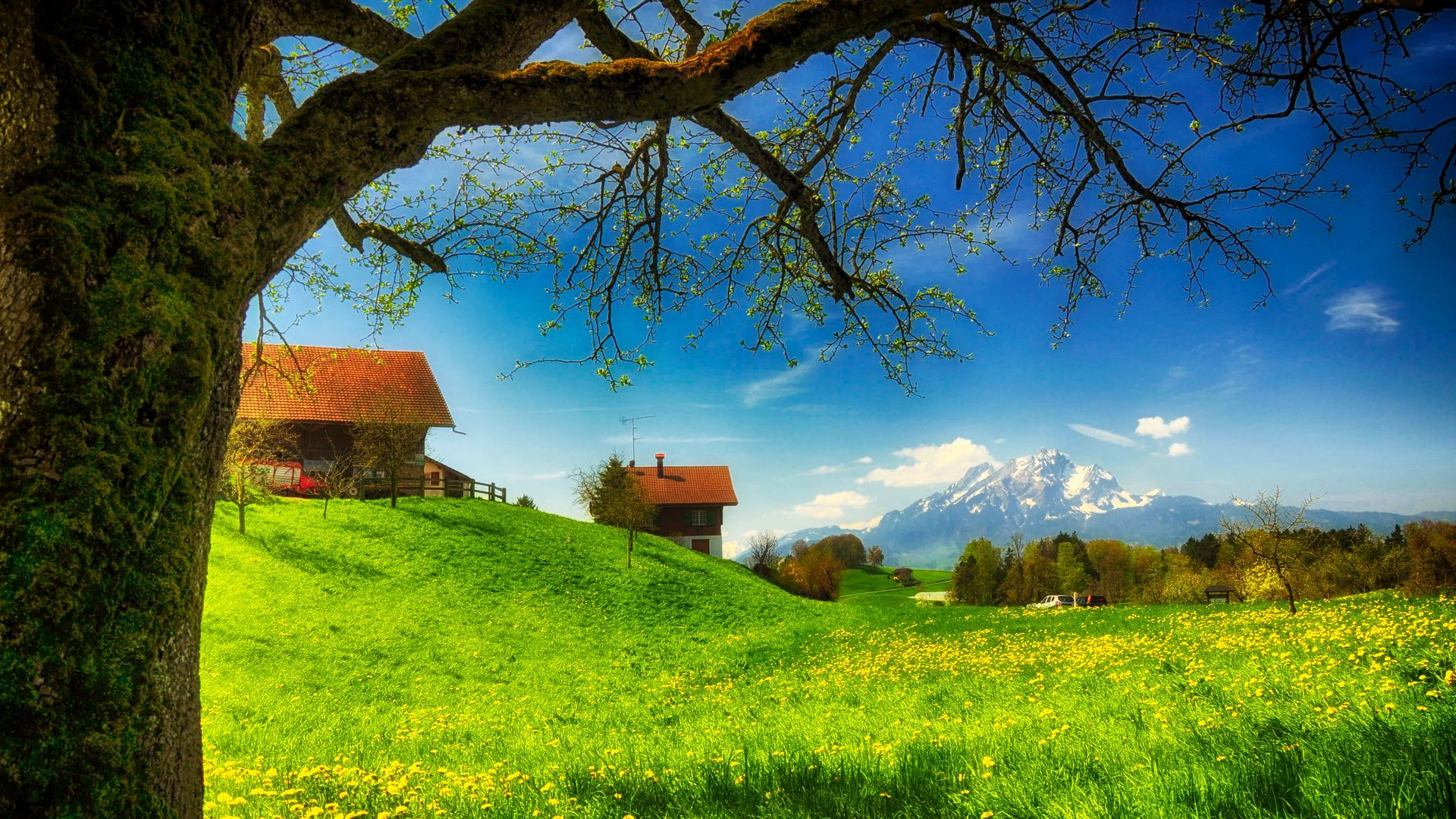 Super Simple Hd Free Best Wallpapers Spring Season