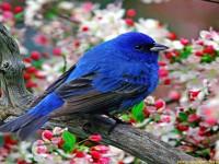 best Bird wallpaper images