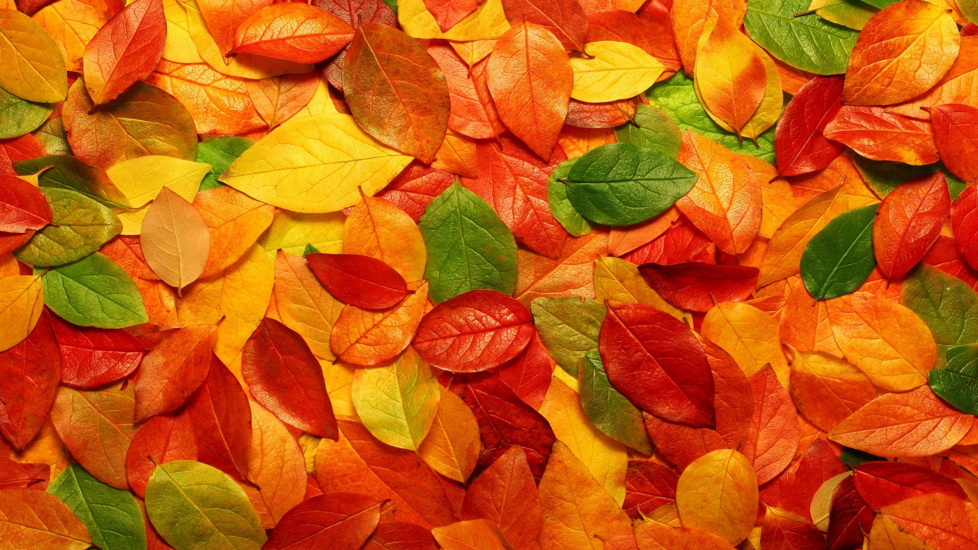 Autumn Desktop Wallpapers The Colors That We Enjoy1105 Hd Wallpaper
