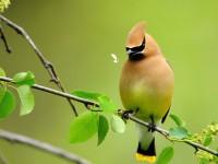 Beautiful-Birds-Wallpaper-8