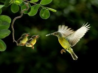 Beautiful-Birds-Wallpapers-Pictures