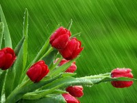 Rainy Season HD Wallpapers, Rain makes our life most beautiful .So, Rainy season wallpapers are ready for download Free HD latest rainy wallpapers are avail