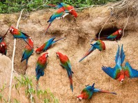 Beautiful Colorful Parrots Bird Nice Wallpapers