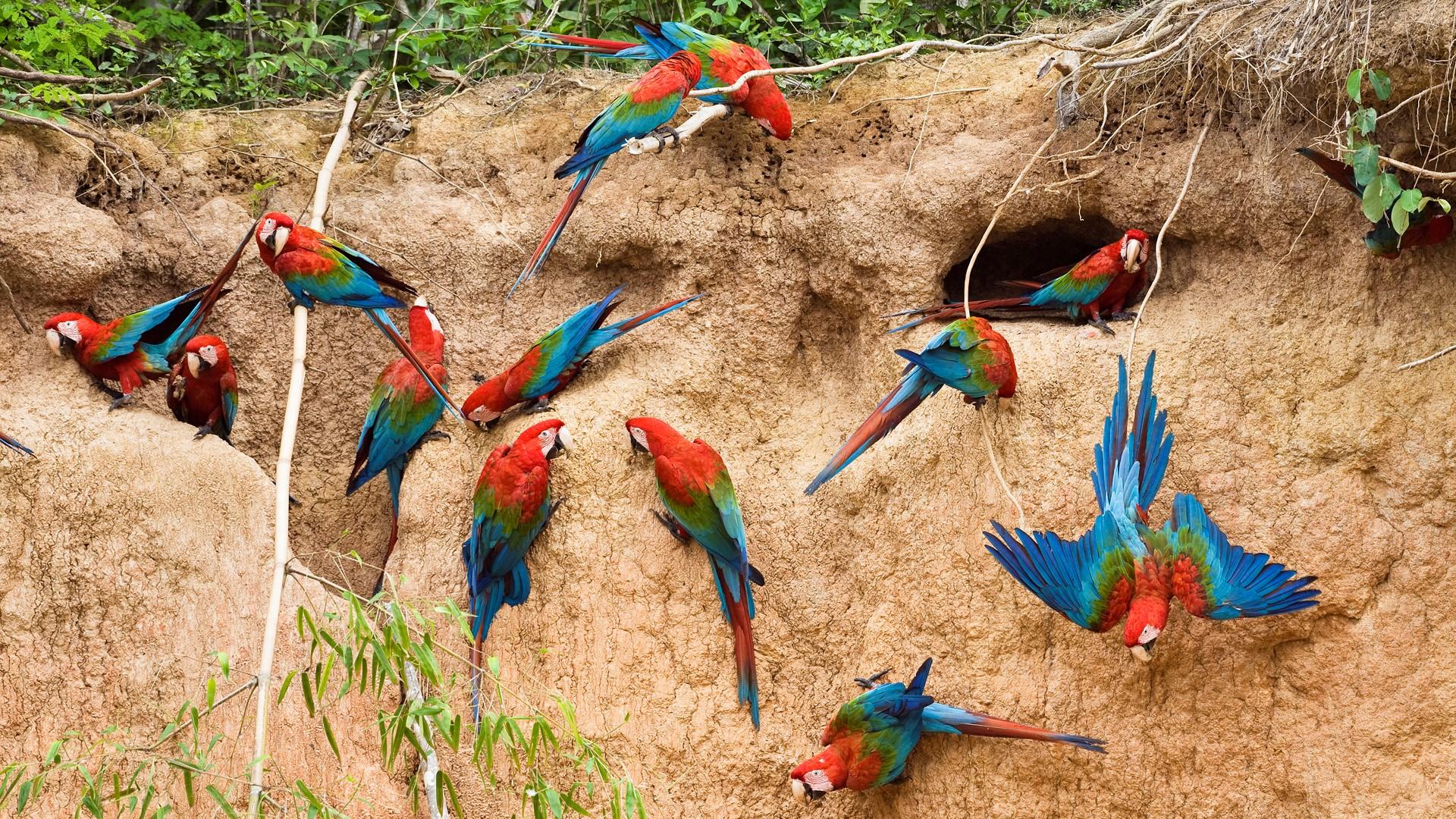 Beautiful Colorful Parrots Bird Nice Wallpapers Hd Wallpaper