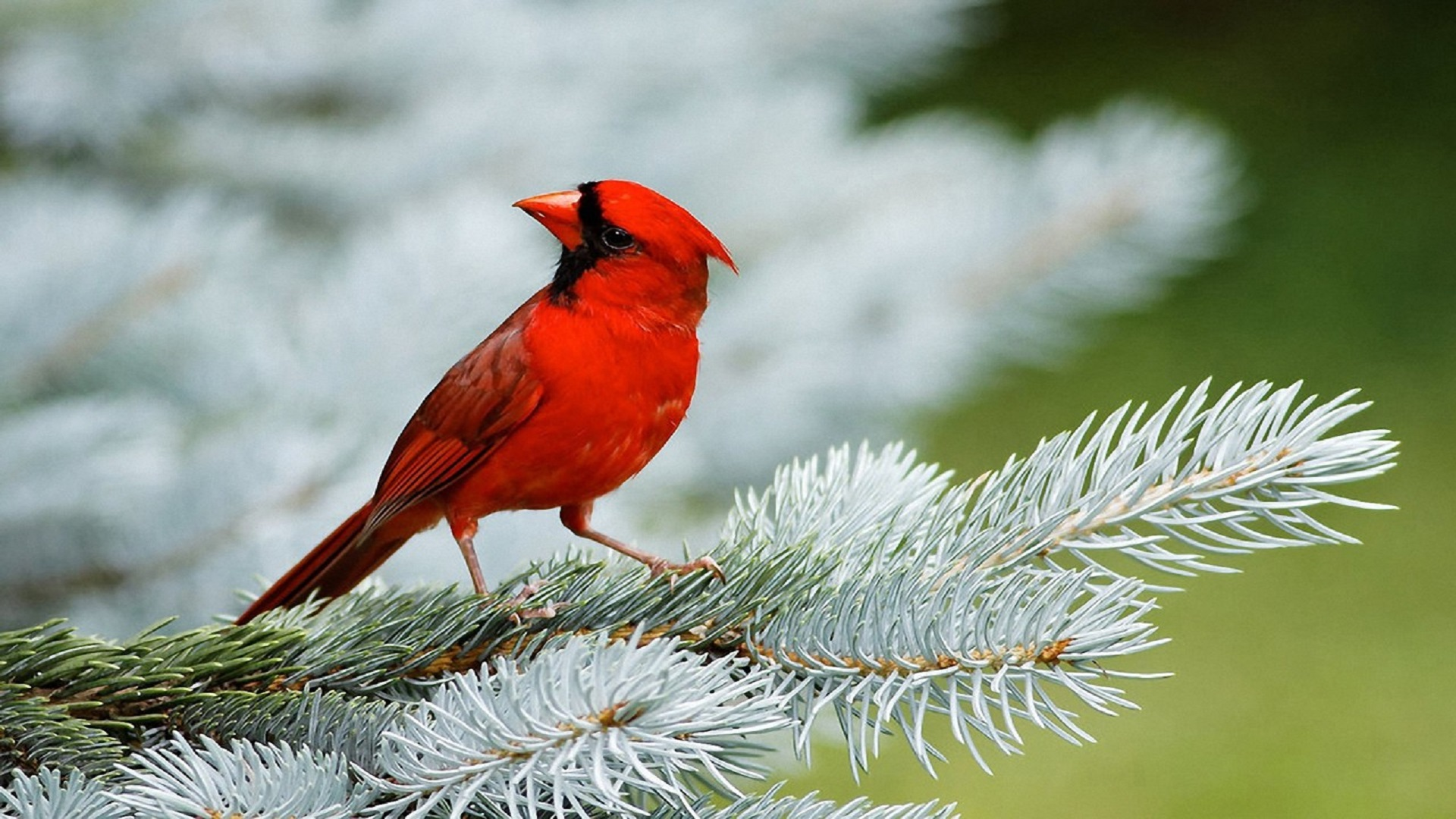 Best Top Desktop Birds Wallpapers