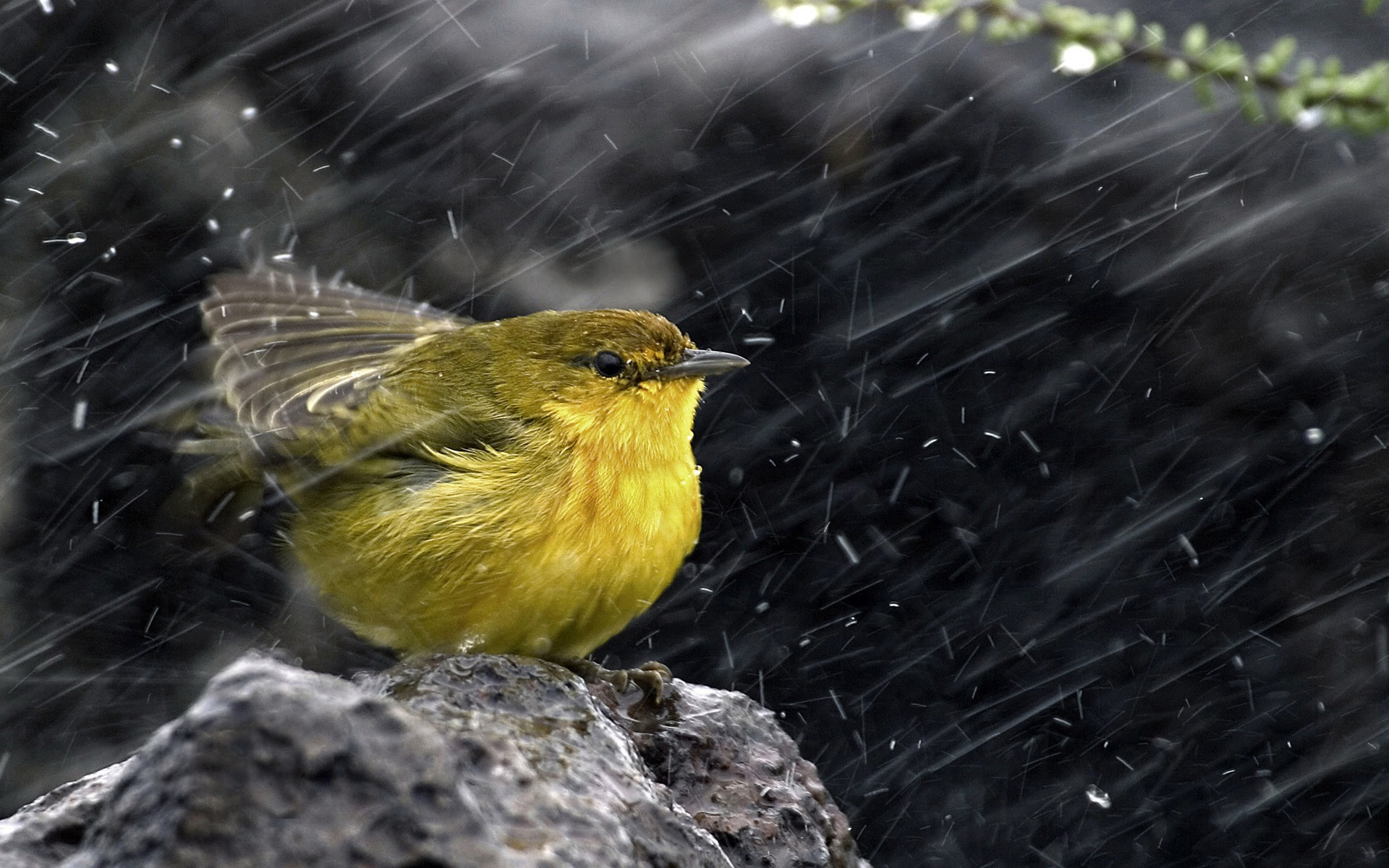 bird-in-rain-hd-wallpaper - hd wallpaper