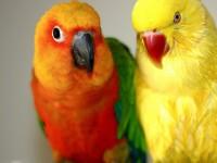 Couple-Bird-Beautiful-Photos